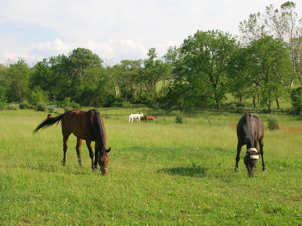 HORSES 6-19.JPG