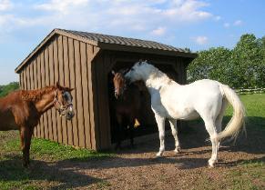 HORSES 6-21.jpg