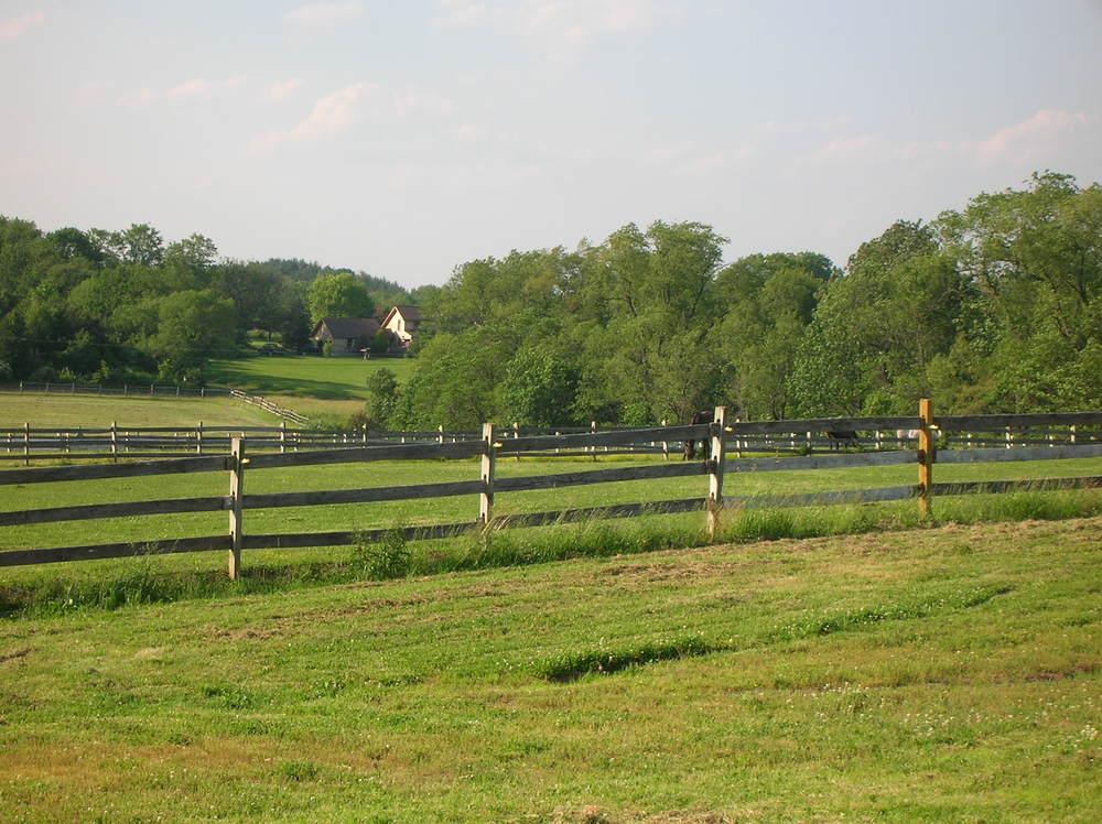 HORSES 6-20.JPG