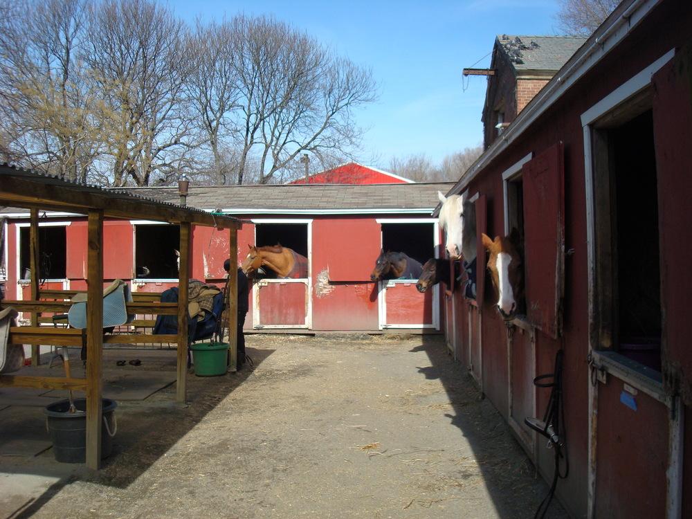 HORSES 5-11.JPG