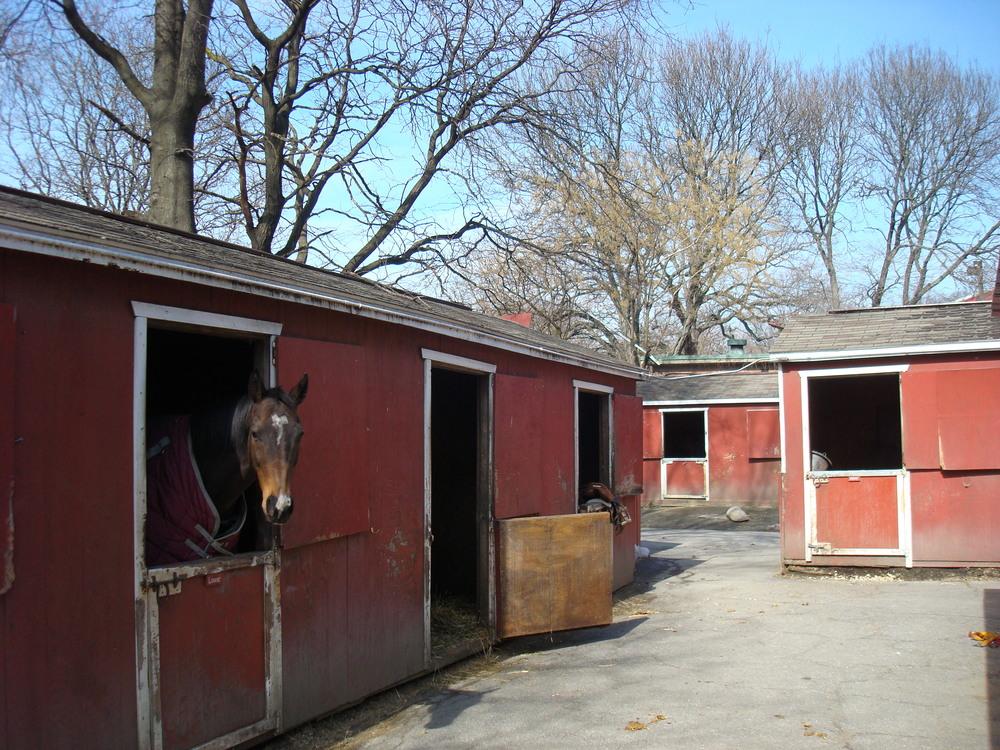 HORSES 5-13.JPG