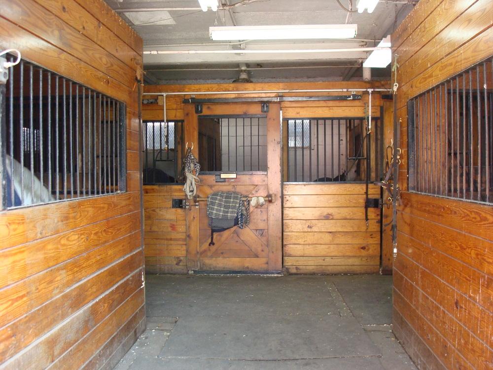 HORSES 5-17.JPG