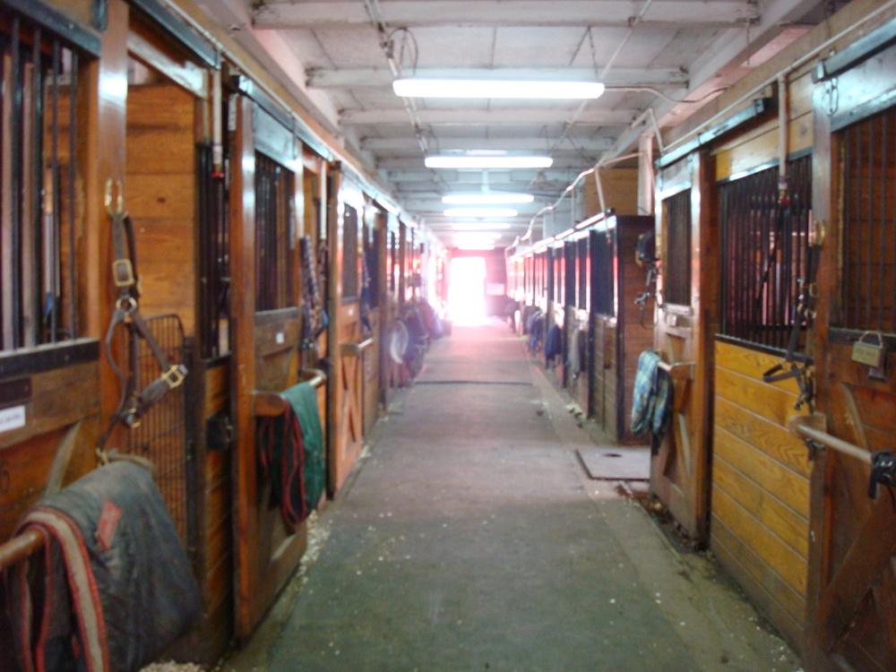 HORSES 5-18.JPG