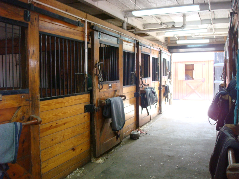 HORSES 5-19.JPG