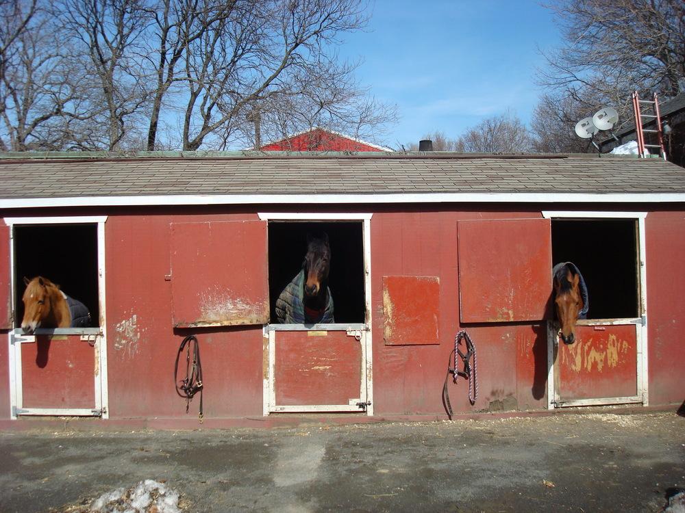 HORSE FARM 5