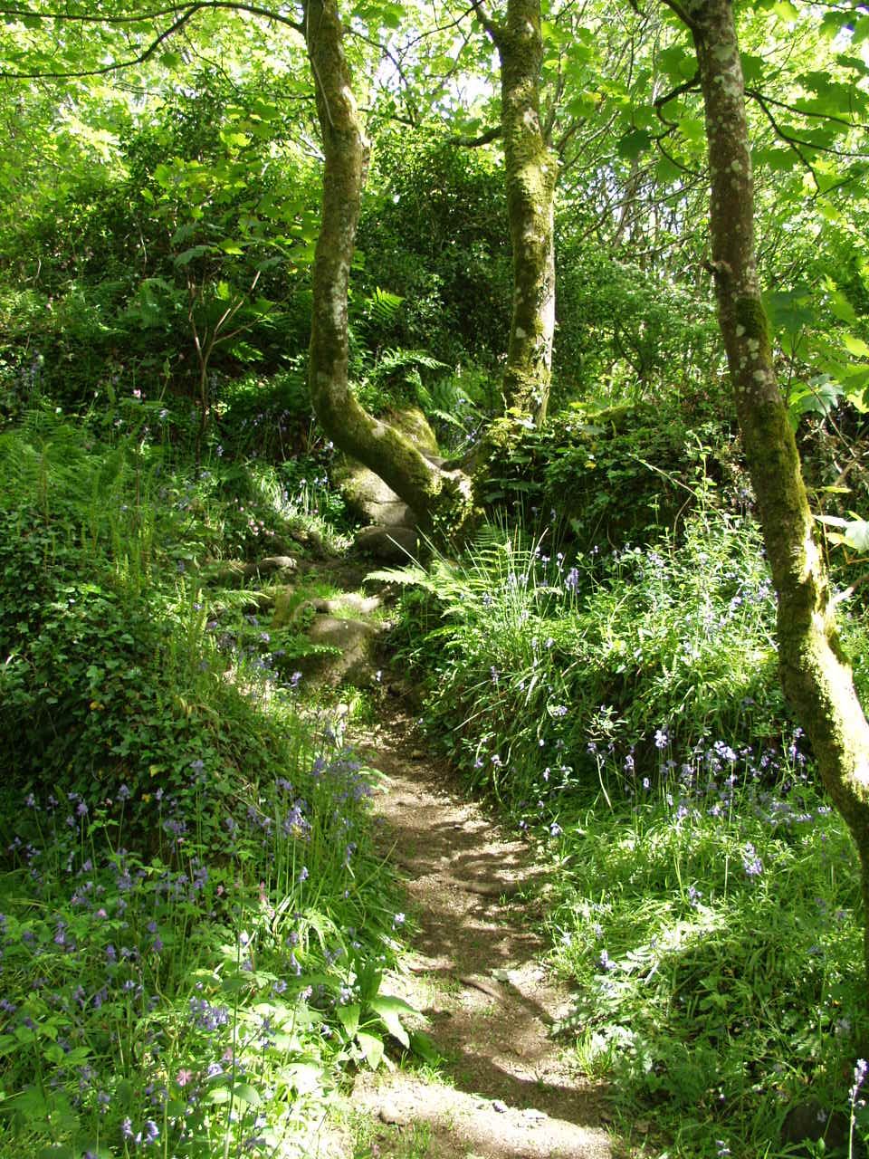 Stunning wildflowers in the woods at Lamorna