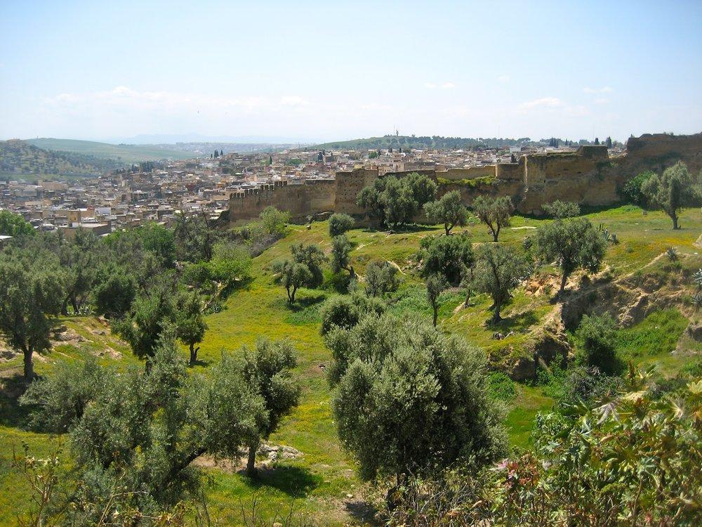 Olive groves Fez.JPG