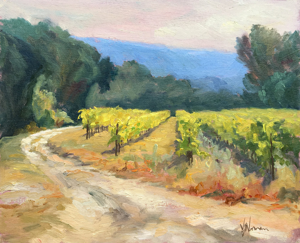 Midday Light in the Vineyard