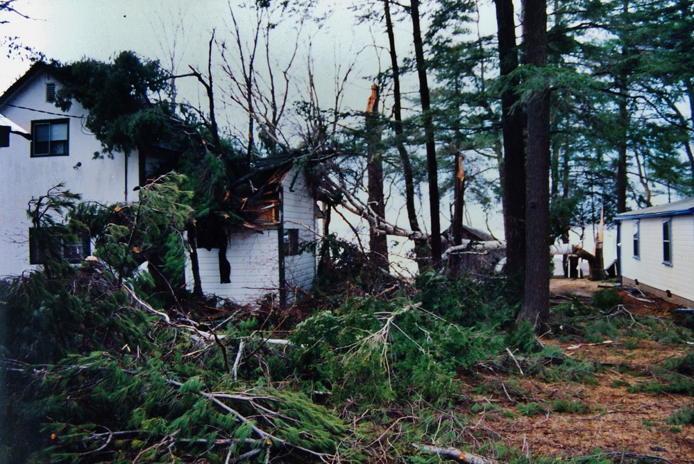 1991 wind  storm,  Crowe Lake, Marble Point Rd,  Gladney trees on Ralph Neal-Dan Terrion cottage