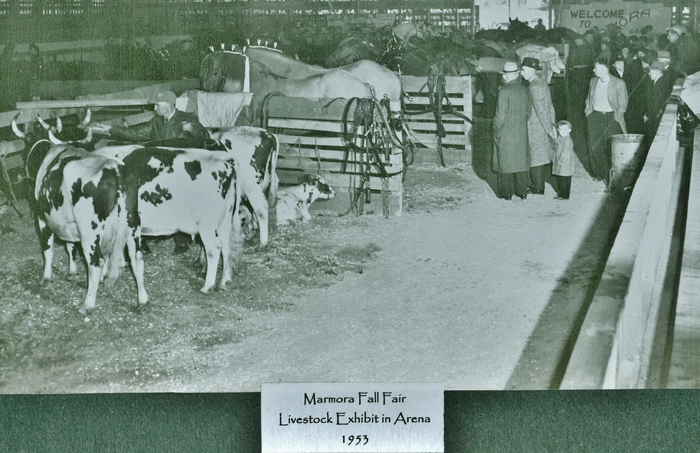 Marmora Fair 1953 Livestock Exhibit.jpg