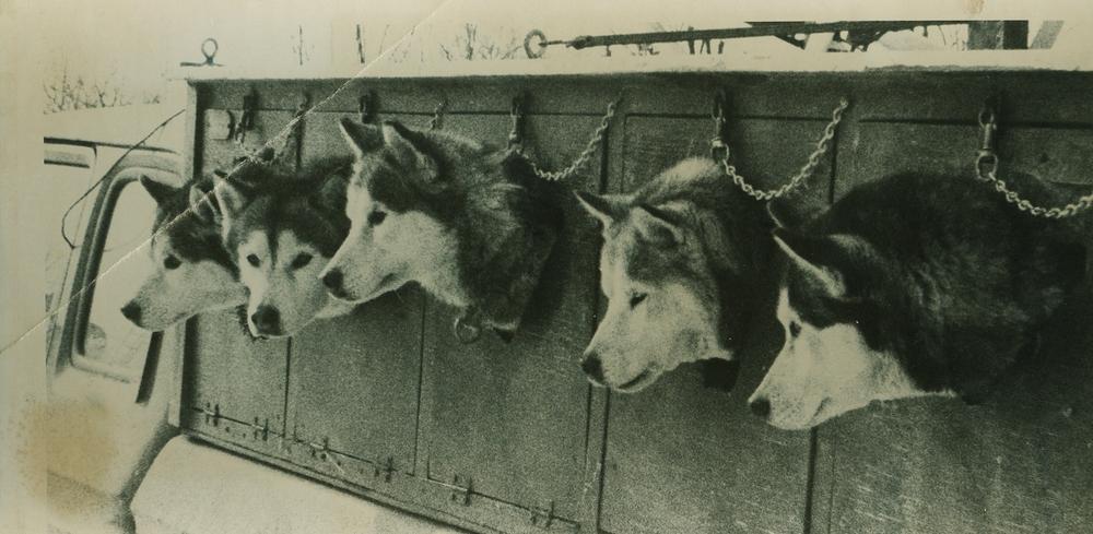 Snofest dogs.jpg