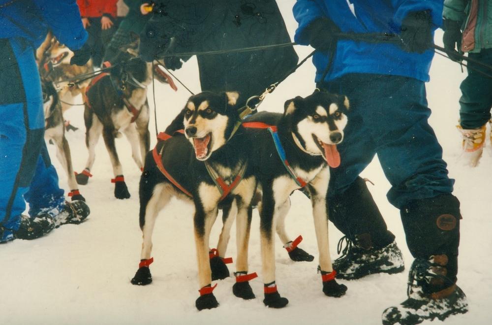 1997 Snofest dogs.jpg