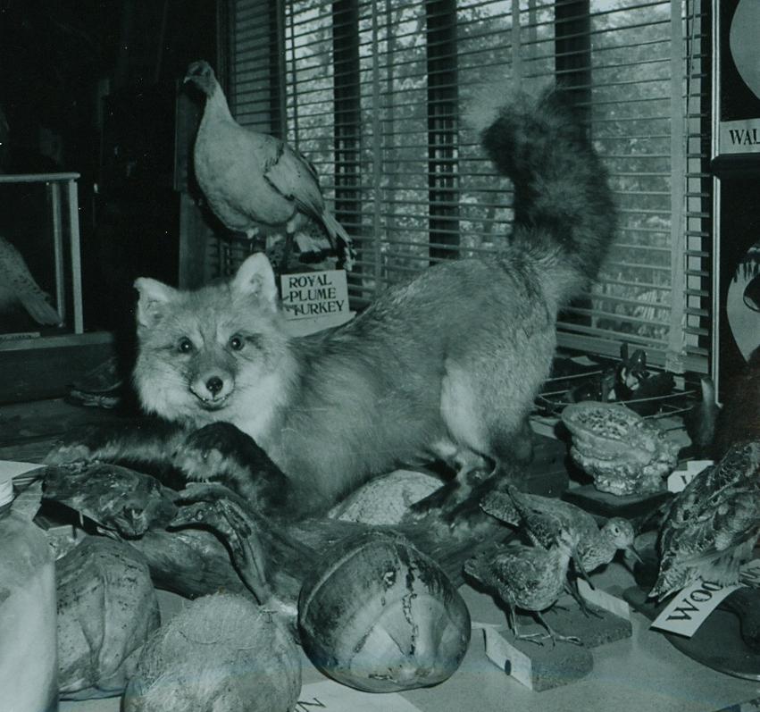 Dr. Hammond Taxidermy collection 4.jpg