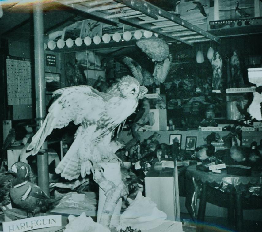 Dr. Hammond Taxidermy collection 3.jpg