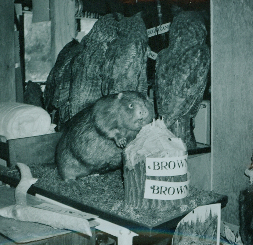 Dr. Hammond Taxidermy collection 6.jpg