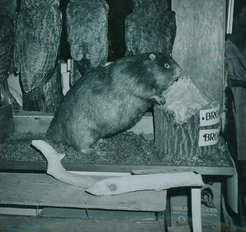 Dr. Hammond Taxidermy collection 7.jpg