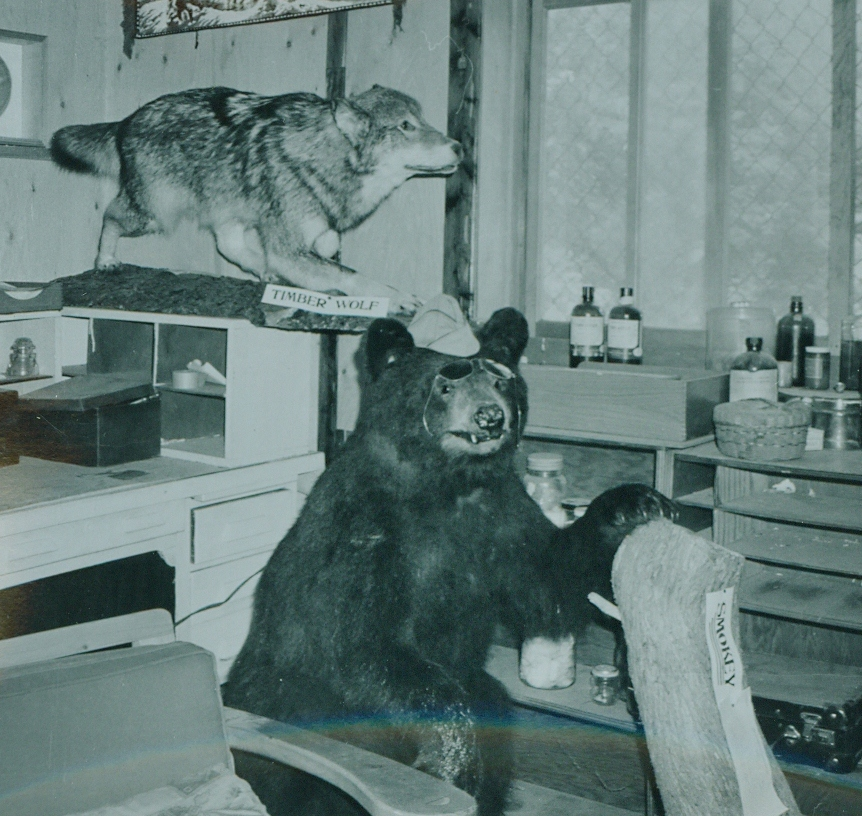Dr. Hammond Taxidermy collection 8.jpg