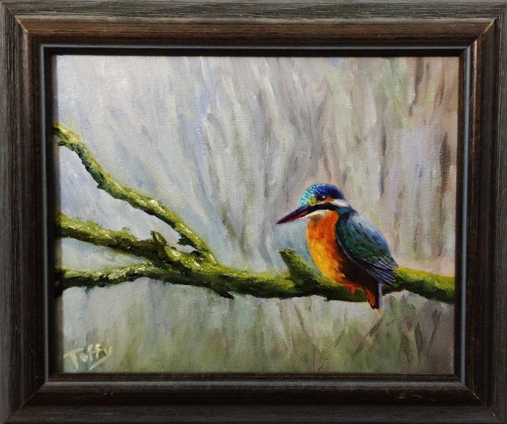 #167  NZ Kingfisher.JPG