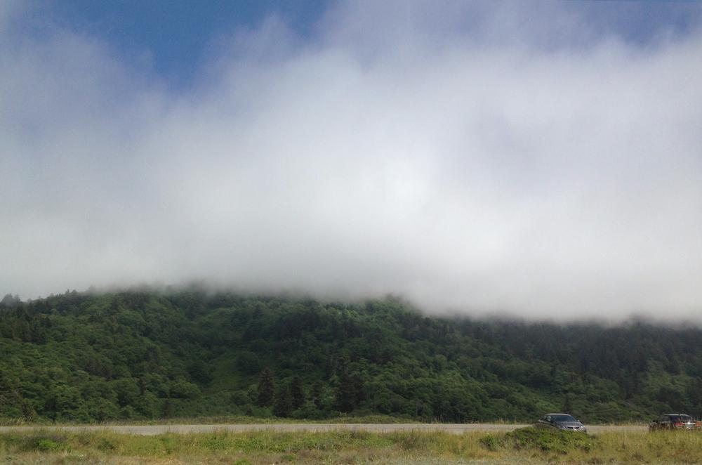 Fog_2.jpg