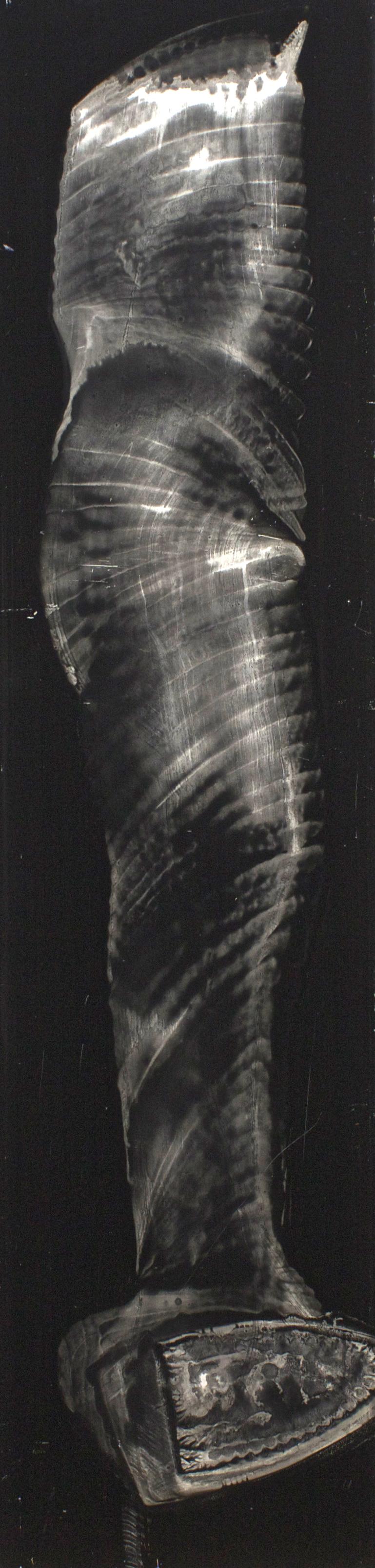 """Oil on masonite 12"""" x 24"""" (30cm x 122cm)  2003"""