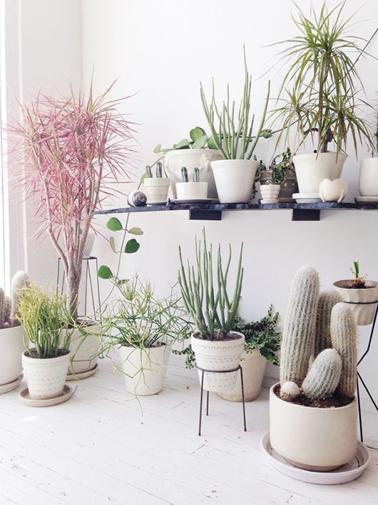 Forever obsessing over plants, but I'm all  cactus, cactus, cactus  right now.