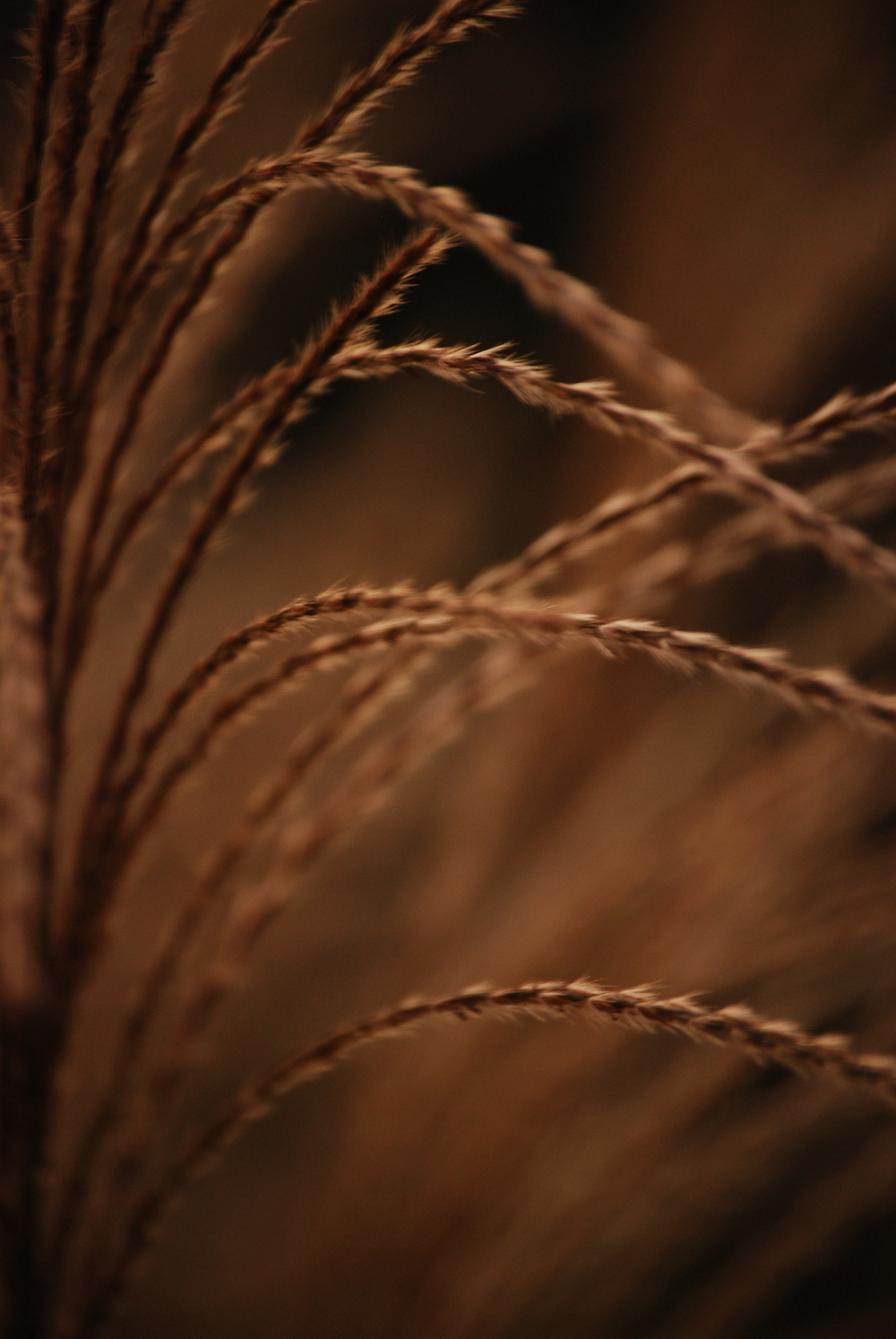 Fall Grass