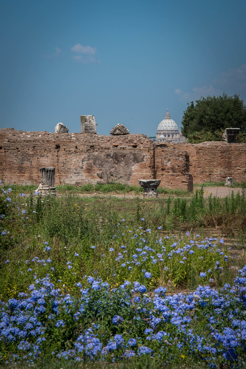 St. Peter's from Palatine Hill