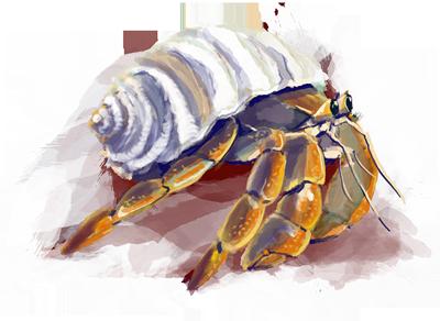 hermitCrab_web.png
