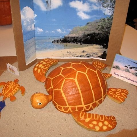 turtlepumpkin2.jpg