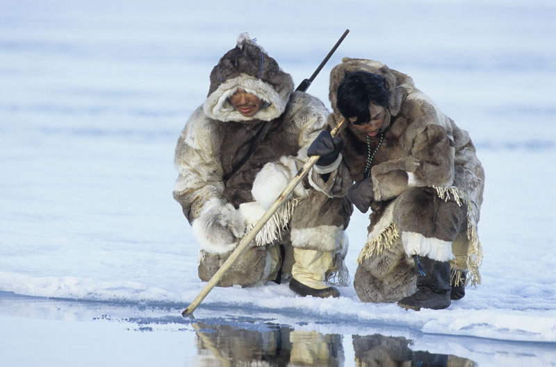 inuit-food-seal