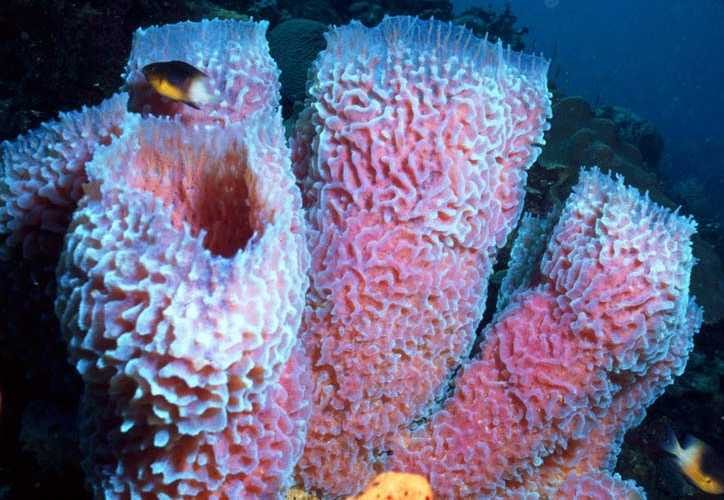 5 Facts About Sponges Sanibel Sea School