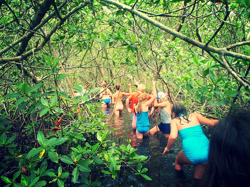 Our devoted tribe of marine worm enthusiasts ventured into the mangroves in search of even more fascinating worms.