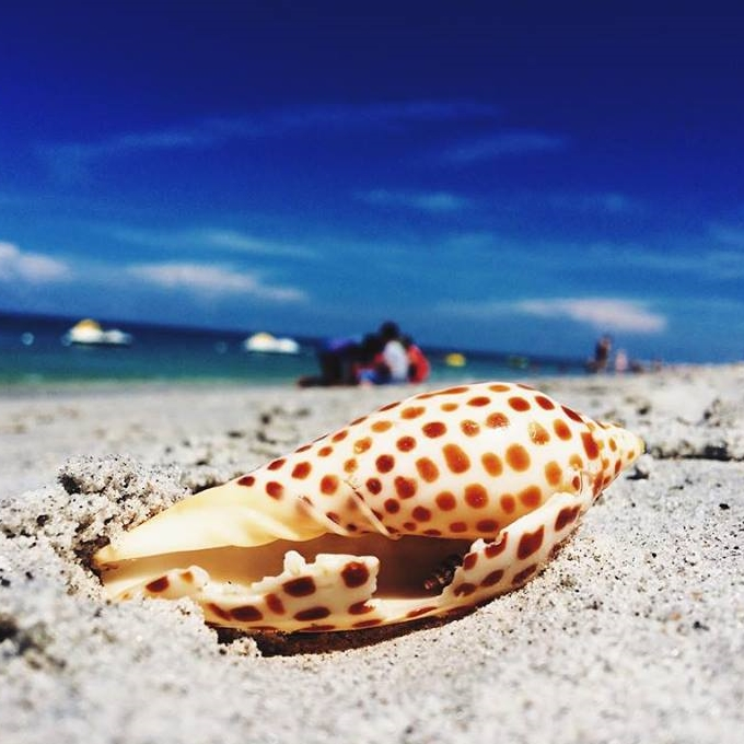 """My first junonia! I've been shelling for years and have been waiting so patiently to find one."" -Brooke Linn"