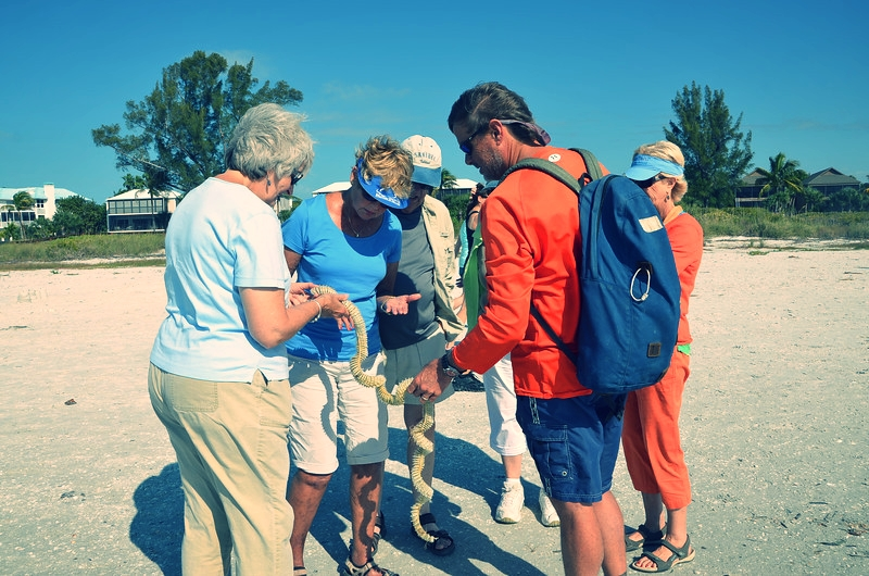 Adult students enjoy a beach walk led by Sanibel Sea School's Executive Director, Dr. Bruce Neill.