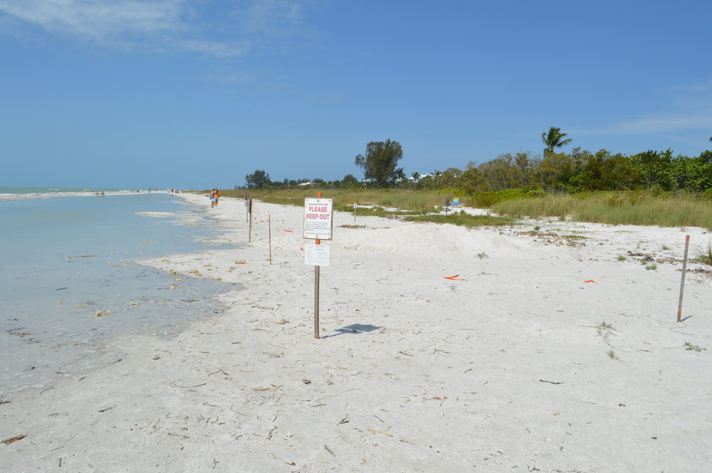 A Snowy Plover nesting site on Sanibel's East End.