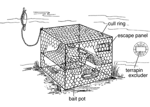 Crab traps are common in our local waters, and sometimes wash up on the beach after a storm. Each trap is labeled with a fisherman's identification information. Image: Chesapeake Quarterly