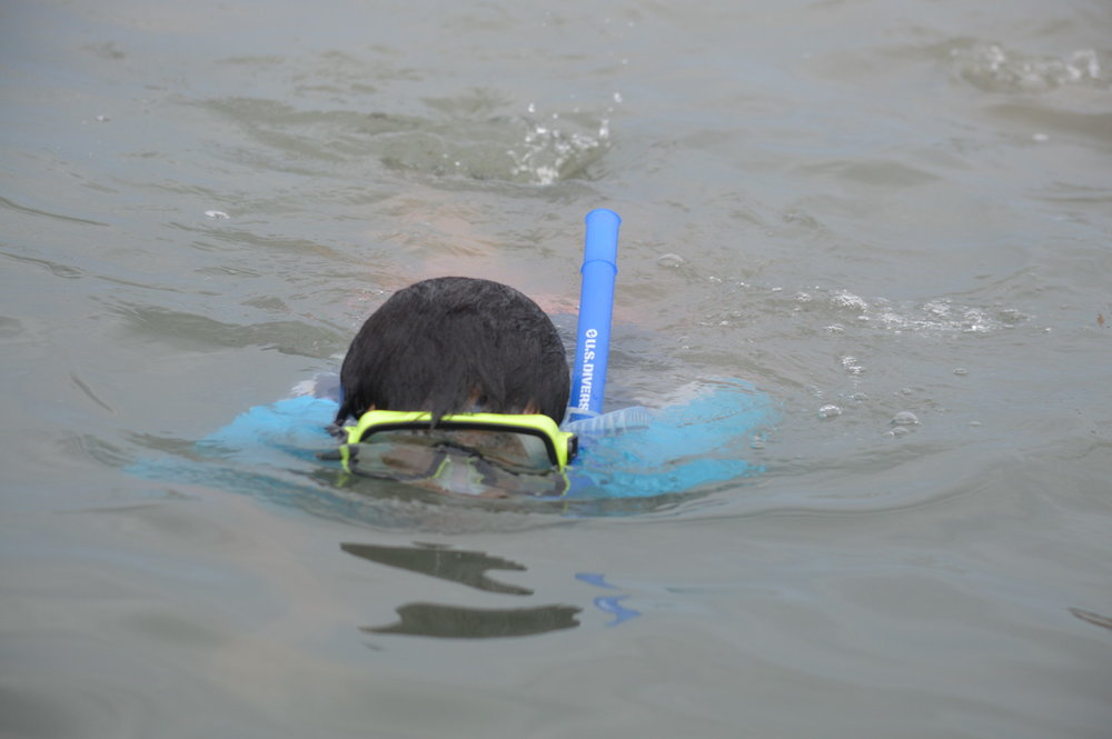 Snorkeling is a favorite activity at Sanibel Sea School.