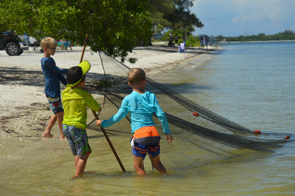 Mighty Calusa Week Campers seined for fish like the Calusa Indians.