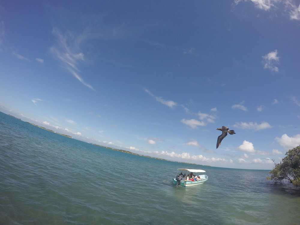 A Brown Booby flies over our group of snorkelers.
