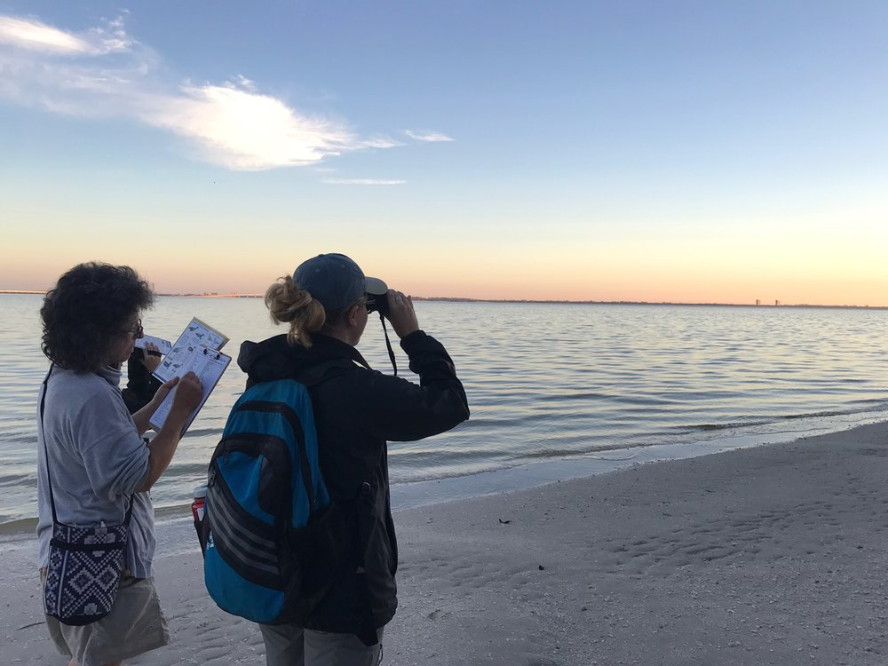 Volunteer birders surveyed Sanibel's east end during the Audubon Christmas Bird Count.