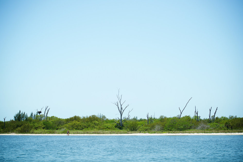 Cayo Costa is an undeveloped island, located about 20 miles north of Sanibel.