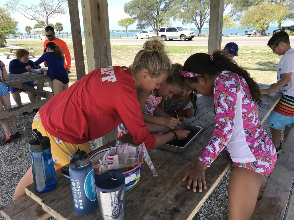 Educator Shannon Stainken led a squid dissection.
