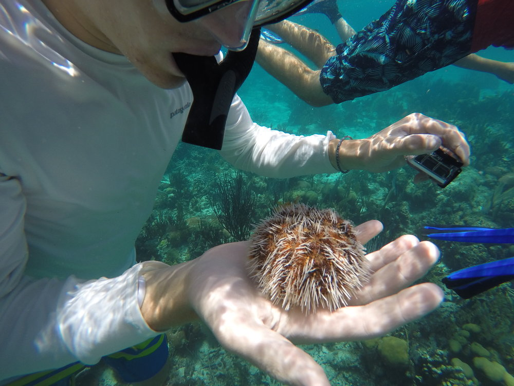 A camper holds a sea urchin while snorkeling in Belize.