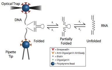 single-molecule-setup.png