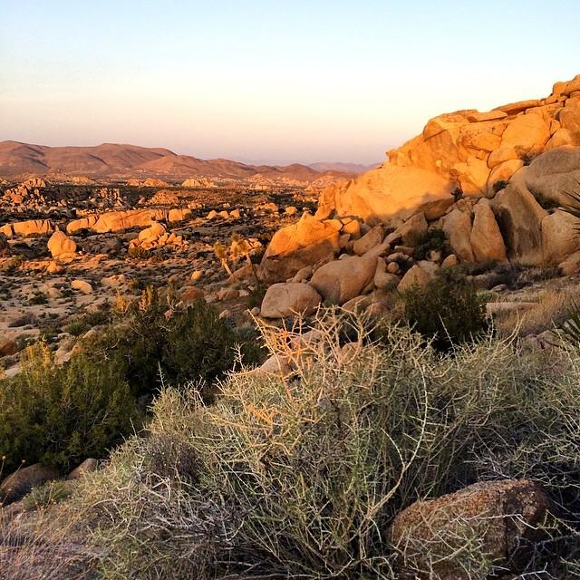 The last of the sun dancing on the rocks. #joshuatree #beauty #sunsetporn #sunset #socal #california #dreaming #desert #love