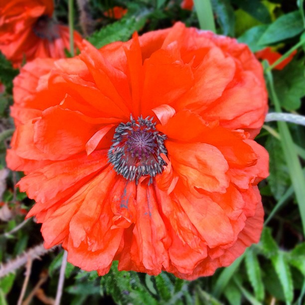 Love you #poppy  (Taken with  instagram )