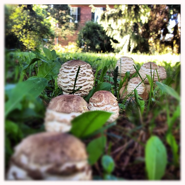 #faerie #toadstools in front of my mums #house sad to leave today #mushrooms  (Taken with  Instagram )