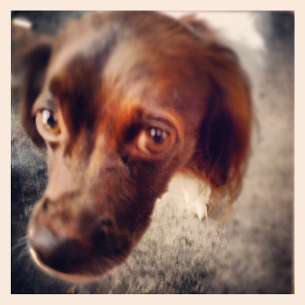 Yup #coffeeshop #pup maybe time to get a #dog sad eyes but so #sweet  (Taken with  Instagram )