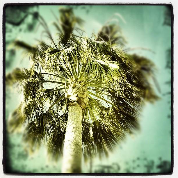 Fuzzy #palm (Taken with  Instagram )