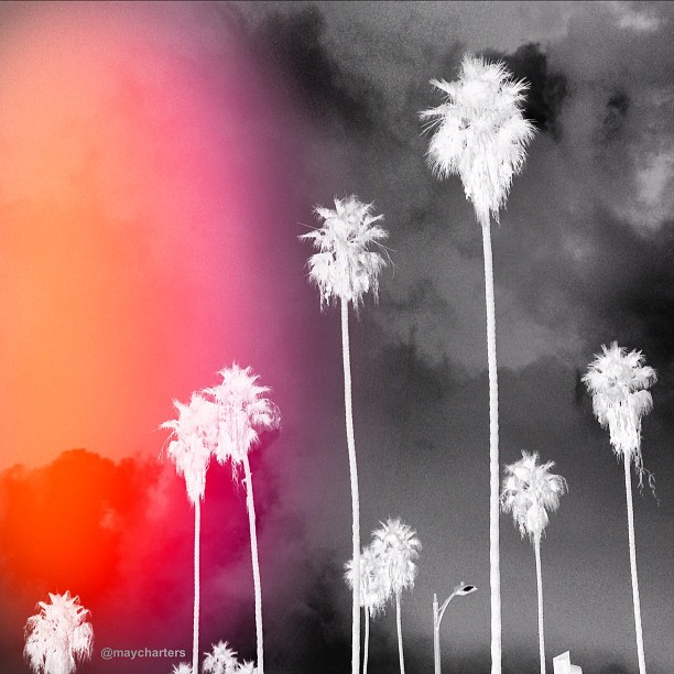 #inverted#palmtrees#streetlamp from my drive out to #flamenco last night. Soon to be a #painting love #california#palms